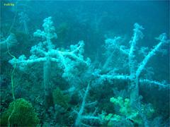 熱海でダイビング|2008/10/12