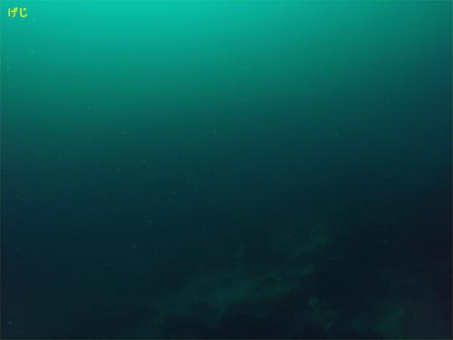 ワラサ|初島でダイビング|2010/06/20