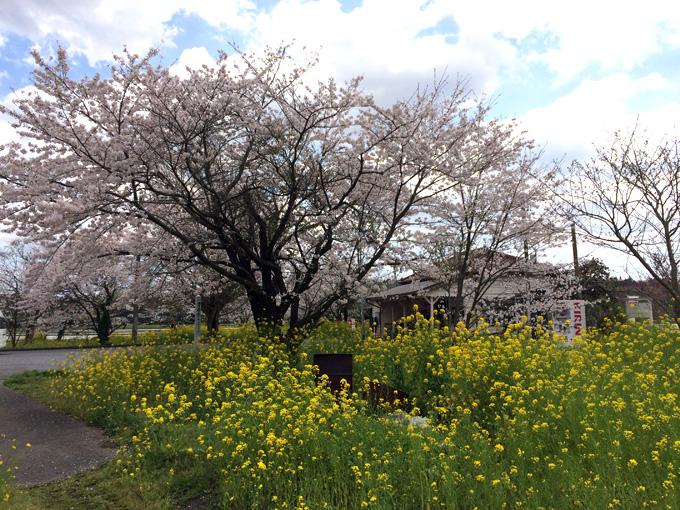 2017_0413_鶴舞公園_05.jpg