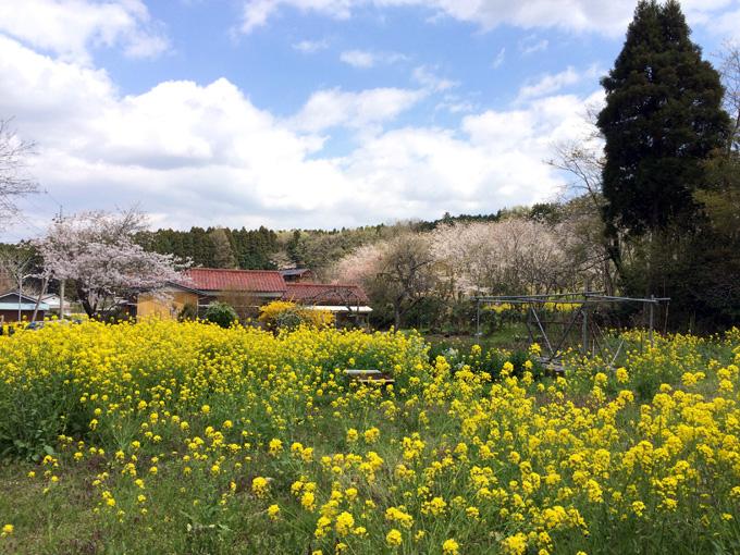2017_0413_鶴舞公園_06.jpg