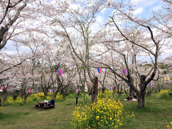 2017_0413_鶴舞公園_10.jpg