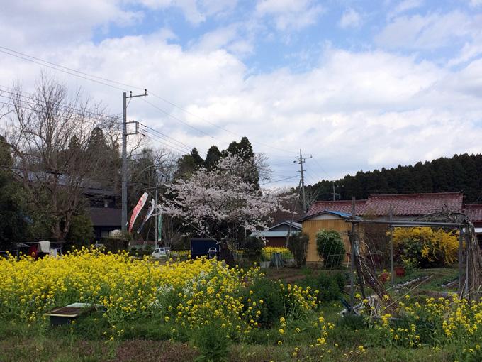 2017_0413_鶴舞公園_11.jpg
