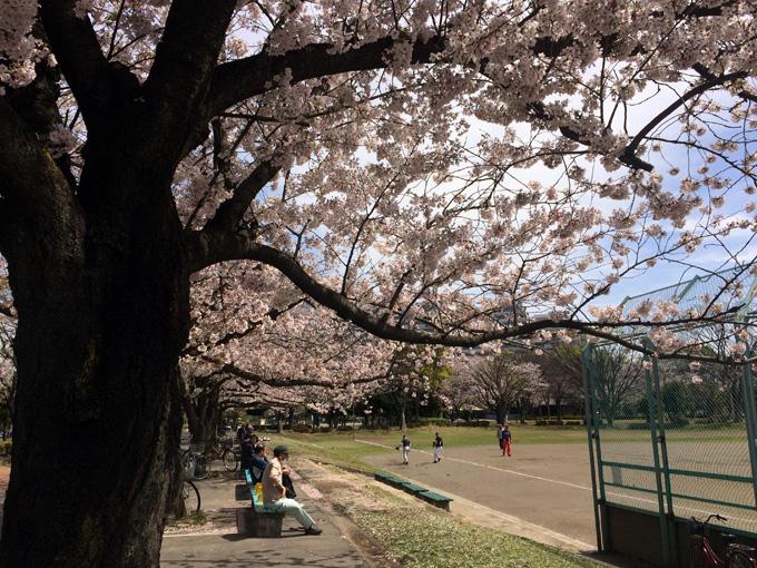 20170412_近所の桜_02.jpg
