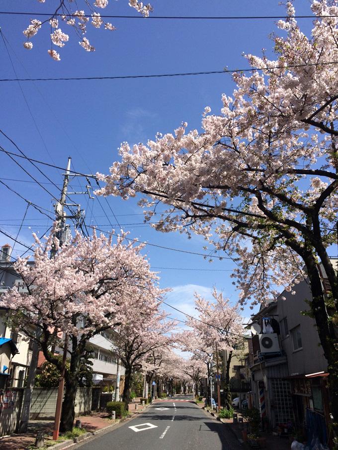 20170412_近所の桜_04.jpg