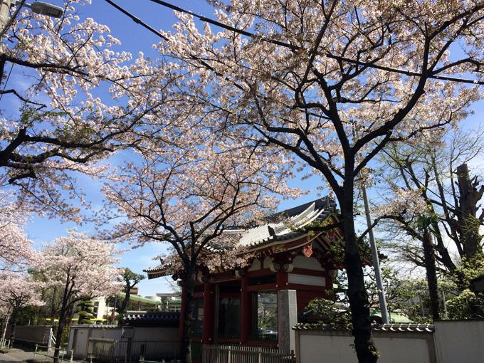 20170412_近所の桜_05.jpg