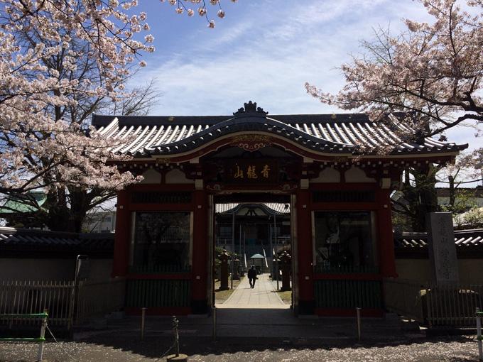 20170412_近所の桜_06.jpg