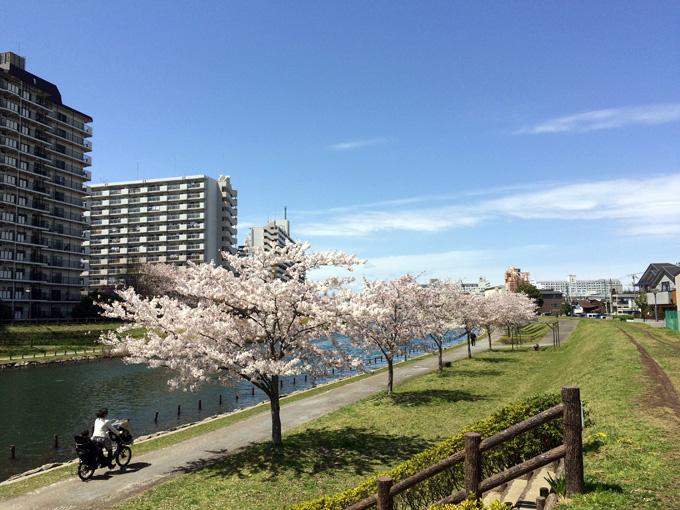 20170412_近所の桜_11.jpg