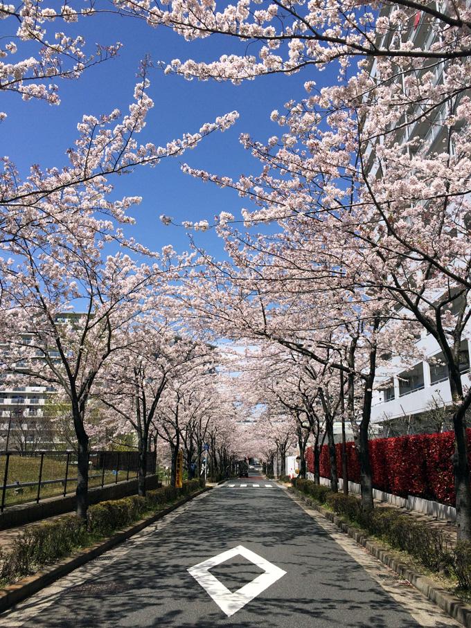 20170412_近所の桜_12.jpg