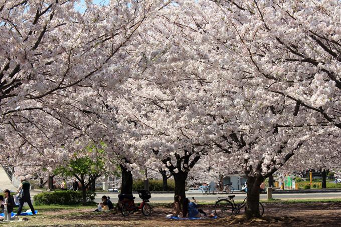 20170412_近所の桜_14.jpg