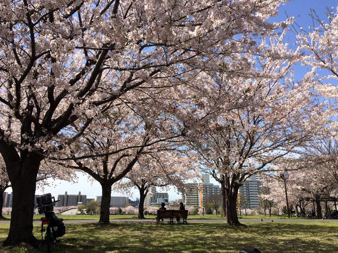 20170412_近所の桜_17.jpg