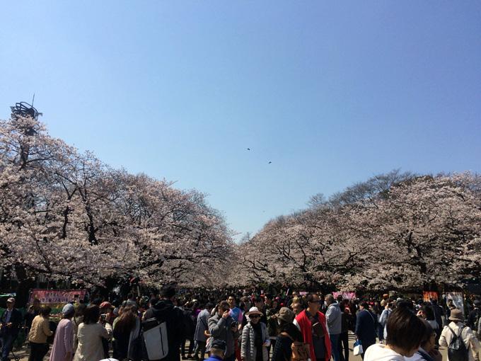 20170404_上野公園_01.jpg