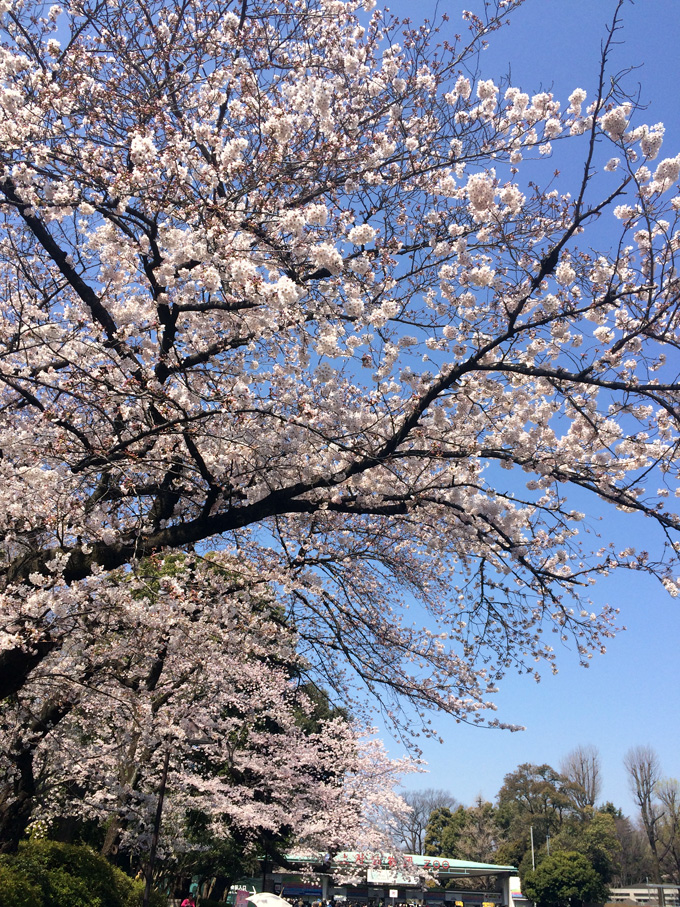 20170404_上野公園_02.jpg