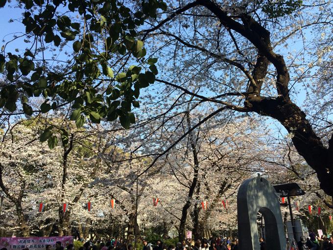 20170404_上野公園_07.jpg