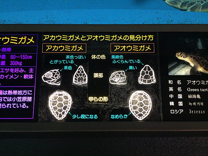 20170315_浅虫水族館_03.jpg