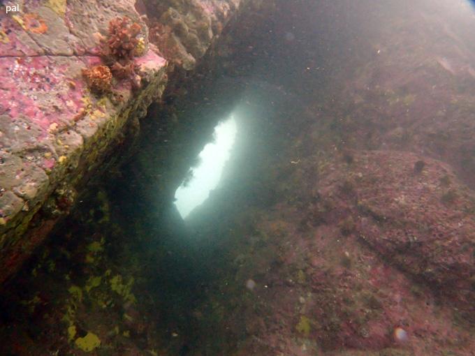 竹の裏グロット|女川でダイビング