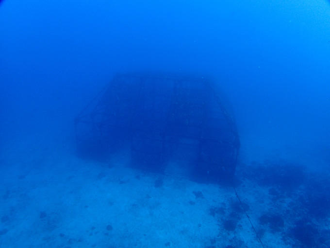 初島でダイビング