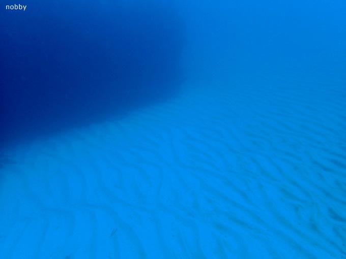 弁天出しの砂紋|勝浦でダイビング