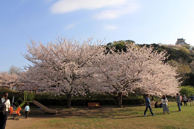 城山公園の桜|房総 館山