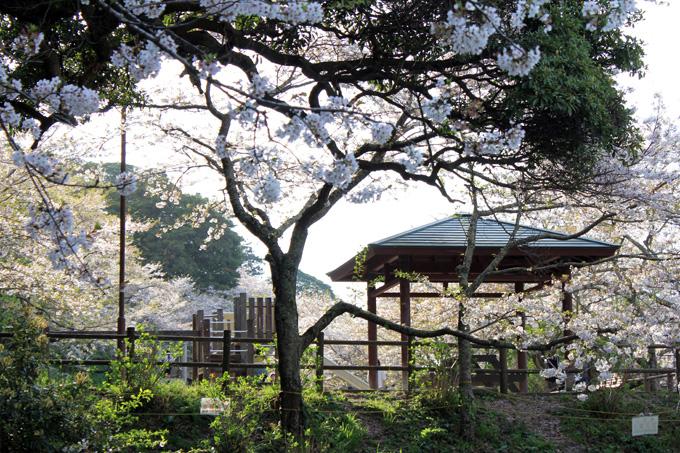 20180331_城山公園_04.jpg