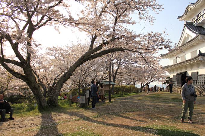 20180331_城山公園_07.jpg