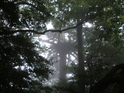 メデューサの木