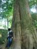 木も私もふt・・