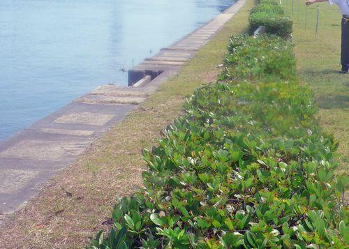 古信濃川1