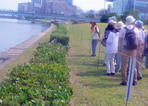 古信濃川3