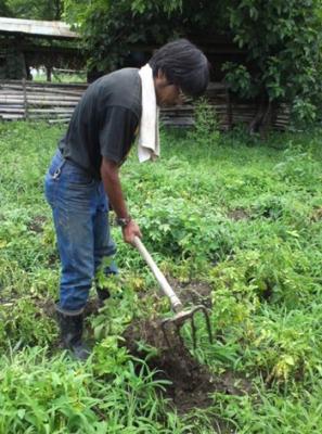 ししょうの芋掘り