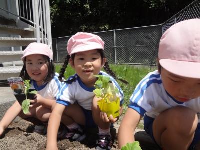 2016/7/5 夏野菜の収穫