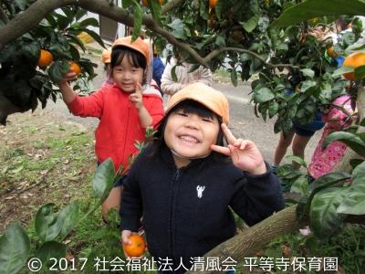2016/12/26 みかん狩り(3歳児.4歳児)