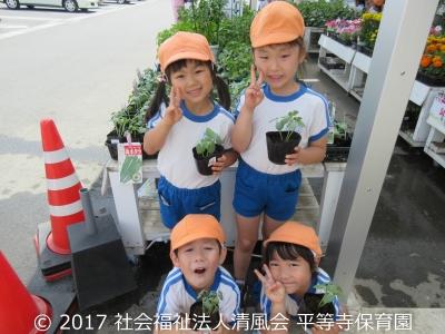 2017/05/26 5歳児の夏野菜の苗買い
