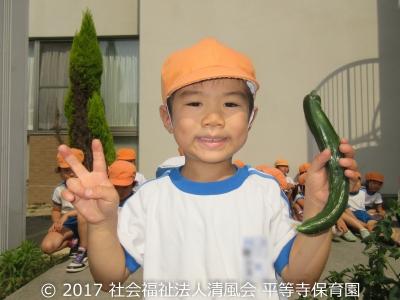 2017/06/30 夏野菜収穫