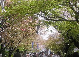 松崎桜まつり
