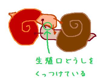 カタツムリの画像 p1_37