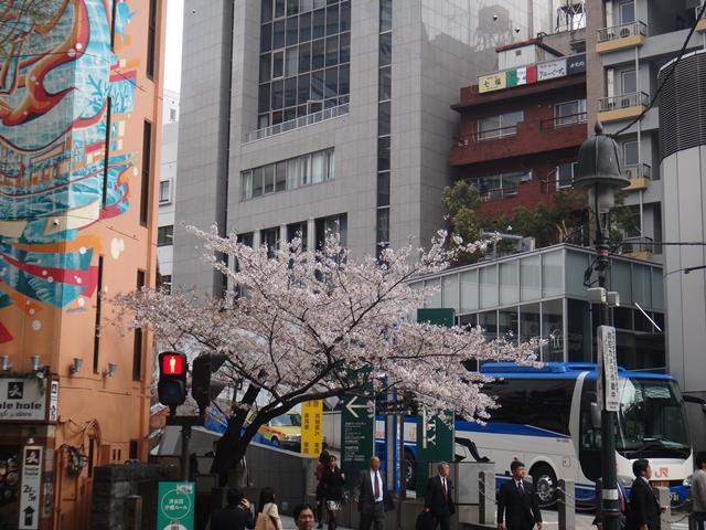 道玄坂の桜