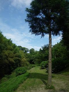 柿山田 場内の風景