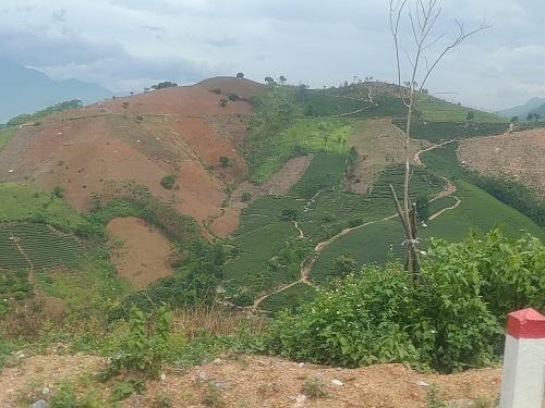 ベトナムの茶園山
