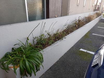 花壇植え替え前