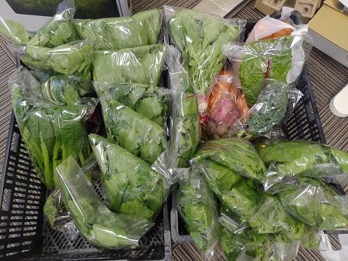 糸島潮風野菜