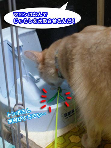 suibotu2073.jpg