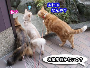mushi3404.jpg