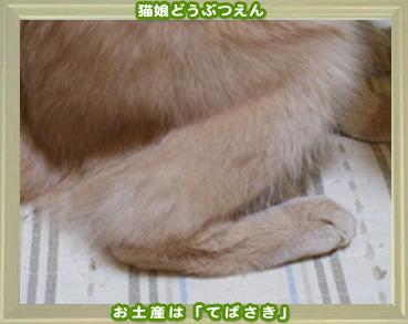 2011動物園8.jpg