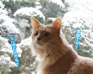 yuki0861.jpg