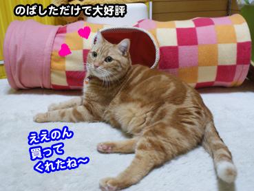 nobasu2095.jpg