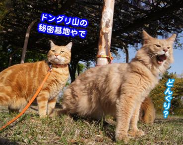 fuji5799.jpg