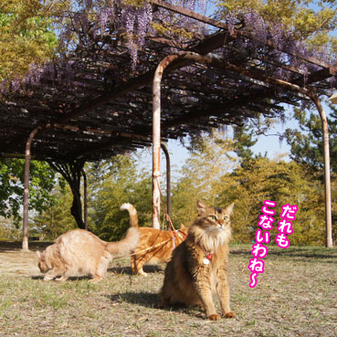 fuji5819.jpg