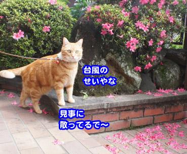 saku7597.jpg