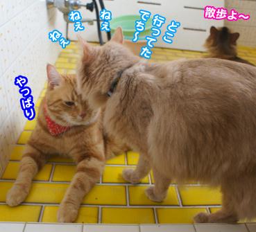 sanpo8204.jpg