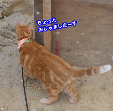 yunbo1009.jpg